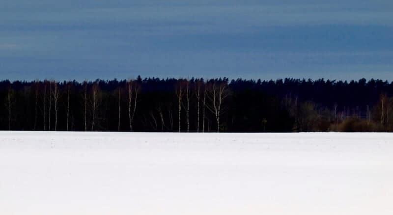 Terviklik-Eesti, Mets, Lumi, Loodus, Ühtne Elu