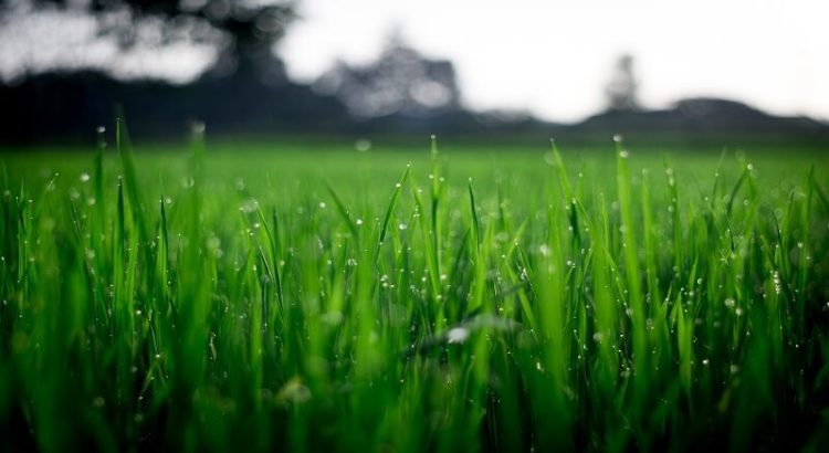 Roheline ilus, roheline muru, vihmapiisad, loodus