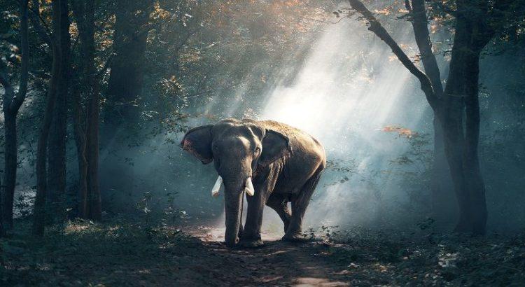 Muretut hoolimist, elevant, loodus, päikesepaiste läbi lehtpuude